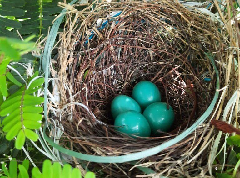 Bird nest at Abellon WTE Plant